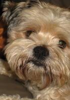 Yogi's puppy face