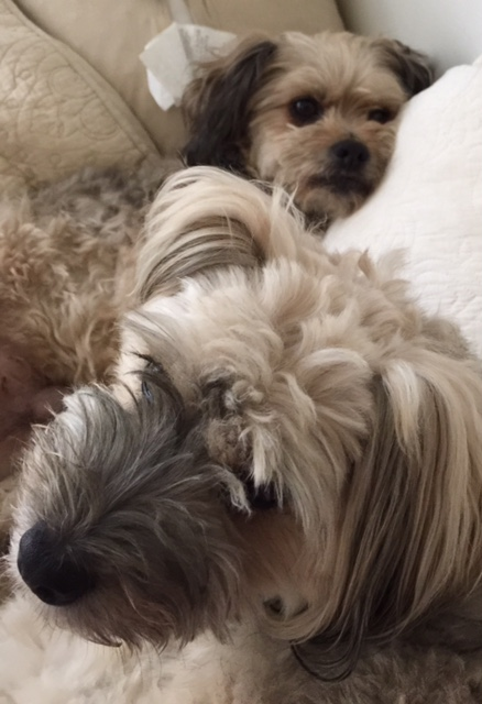 Trisha's sweet dogs