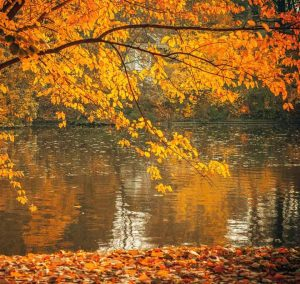 pond and tree with orange leaves